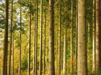 Procura emprego no setor florestal? Encontre-o aqui!