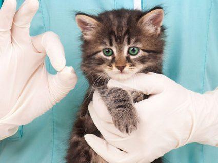 Empresas procuram técnicos de veterinária