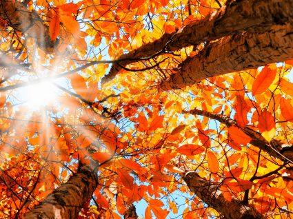 7 fantásticas vistas de outono em todo o mundo