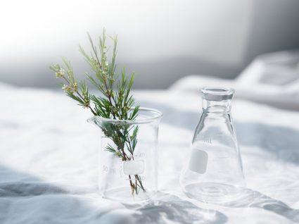 ervas aromáticas num frasco