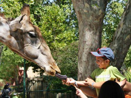 No Jardim Zoológico há férias da Páscoa Selvagens