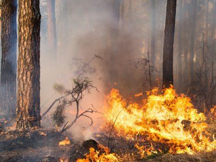 Riscos respiratórios durante os incêndios para a população