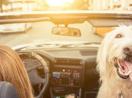 8 dicas para remover o pêlo de cão no carro