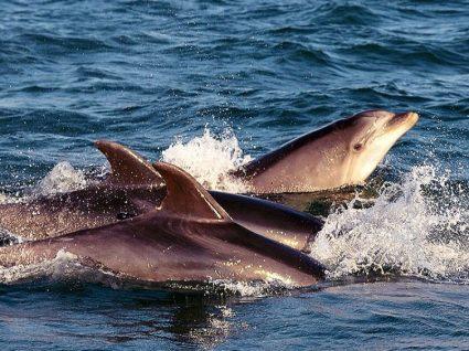 Tróia-Natura promove campanha de proteção de golfinhos