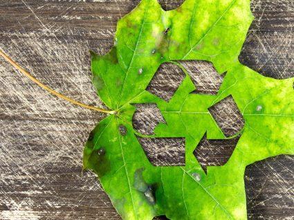 A importância da reciclagem e as melhores práticas no dia a dia