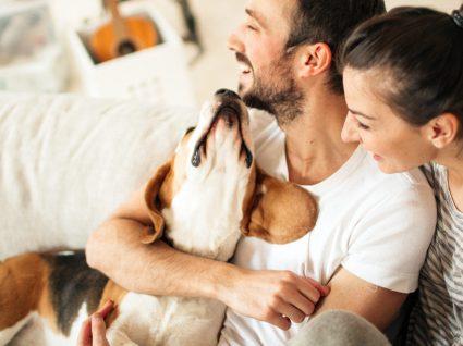 13 boas dicas para quem quer um animal de estimação