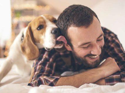7 hotéis que aceitam animais: de norte a sul
