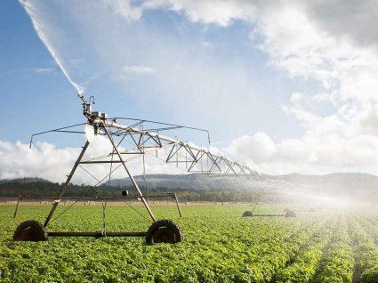 6 ideias para investir na agricultura