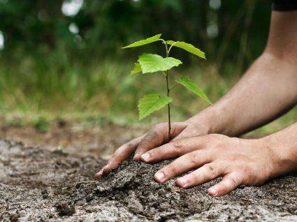 Caloiros da Beira Interior plantam árvores na Serra da Estrela