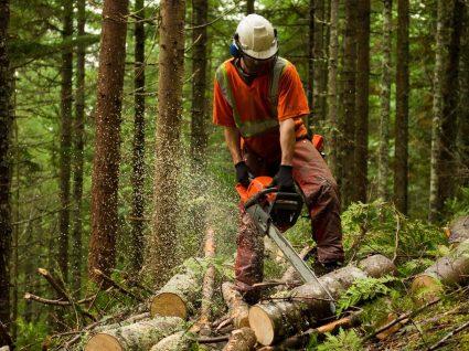 Novas regras para a limpeza de terrenos já estão em vigor