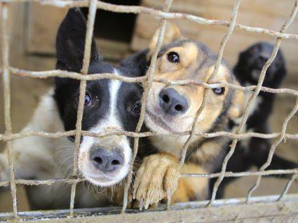 Animais para adoção: onde procurar e cuidados a ter