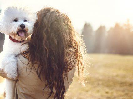 10 cães de raça pequena que vai querer conhecer