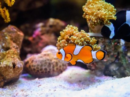 WitStar: o estranho caso do carro com aquário