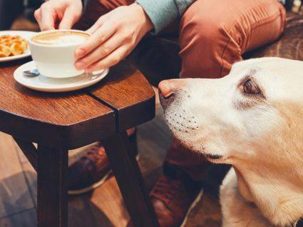 Sabe porque é que o seu cão o segue para todo o lado?