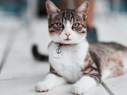 Como educar um gato: 5 truques essenciais