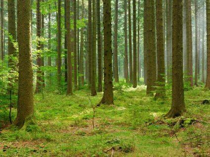 Limpeza de mato: coimas suspensas até junho