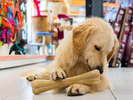 8 lojas de animais low cost para todos os gostos