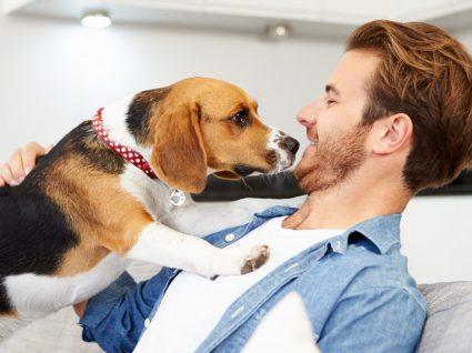 Esta campanha de adoção de animais está a dar que falar