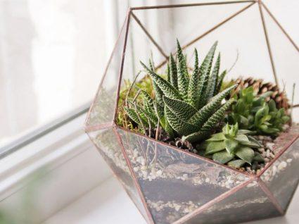 7 dicas para não voltar a matar as plantas lá de casa