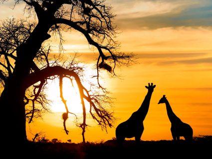 As melhores dicas para quem vai fazer um safari
