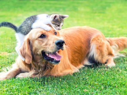 Nomes para animais de estimação: mais de 100 sugestões