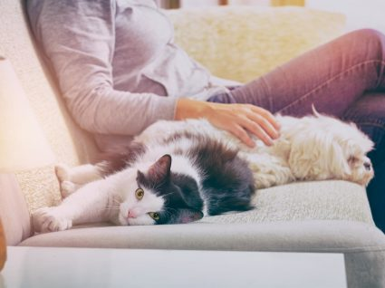 10 objetos domésticos perigosos para o seu animal de estimação