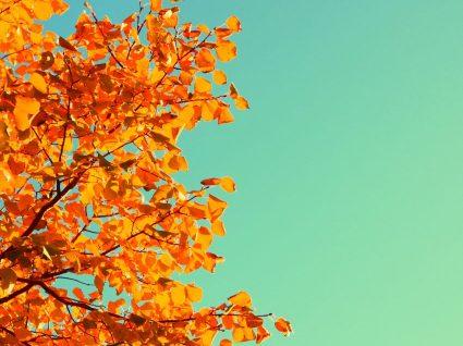 6 razões pelas quais o outono é a melhor estação do ano
