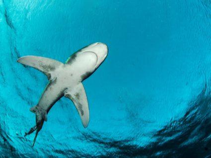 Gostava de nadar com tubarões? Nós dizemos-lhe onde