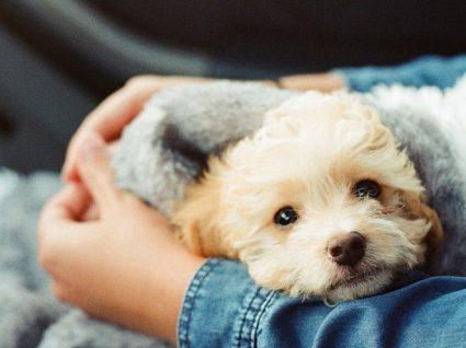 6 sítios onde vai encontrar cães para adotar e cuidados a ter
