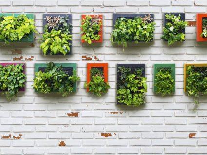As melhores plantas para um jardim vertical