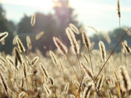 Estas são as 5 plantas que causam mais alergia