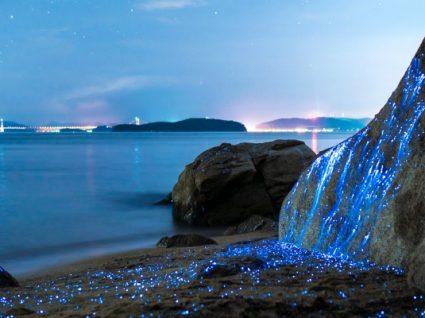 8 praias bioluminescentes que o vão deixar de boca aberta