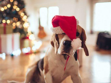8 prendas de Natal para animais: ideias para alegrar o seu amigo
