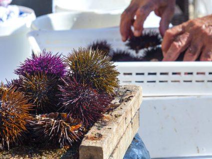 3º Festival Ouriço-do-mar chega à Ericeira