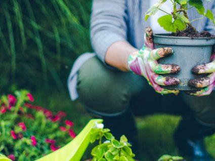 5 prendas de Natal para quem gosta de plantas