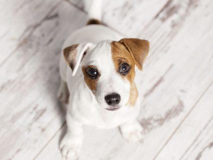 6 restaurantes que aceitam cães