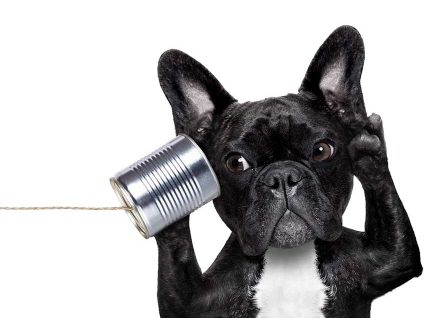 Saúde Animal 24: a linha de apoio para animais