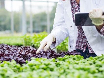 Emprego em agricultura: um setor em crescimento