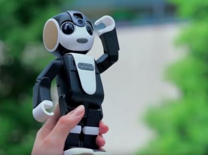 Robohon: o smartphone robot que tem (mesmo) de conhecer