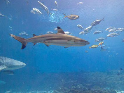 Shark Tank abre inscrições para segunda temporada
