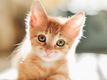 Quanto custa ter um gato? Fizemos as contas por si