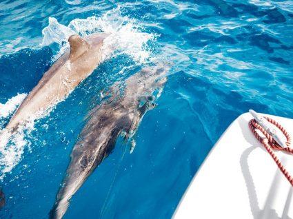 Há sunsets e golfinhos nos sábados de setembro