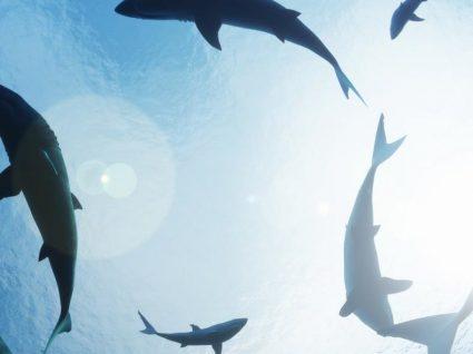 Assisitir a Jaws dentro de água? Parece uma boa ideia…