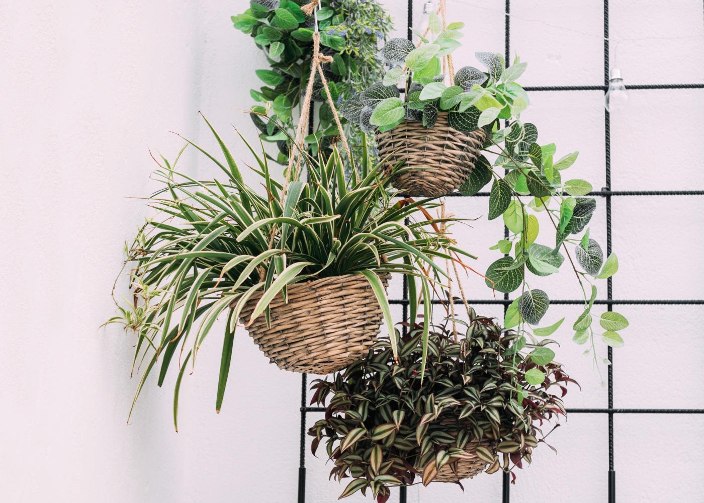 varias plantas penduradas