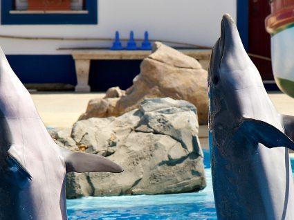 Conheça a agenda de atividades do Jardim Zoológico em maio