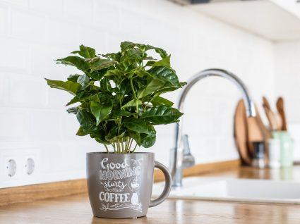 Plantas na cozinha? Conheça as melhores opções