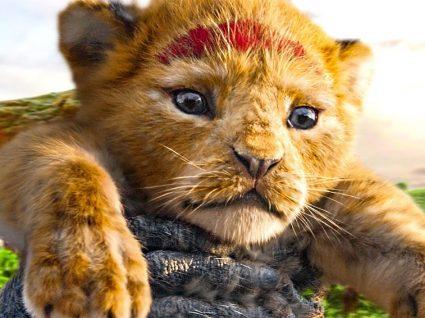 Hakuna Matata: esta é a roupa do Rei Leão que vai querer comprar