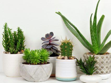 Conheça as 10 plantas perigosas que pode ter em casa