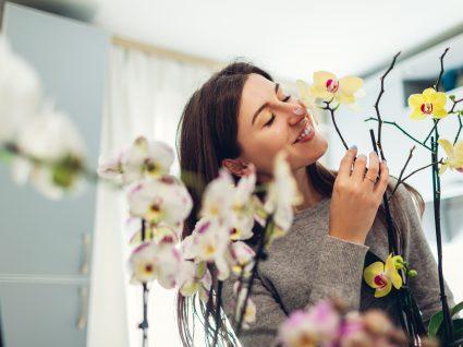 Como cuidar de orquídeas: o guia que lhe faltava