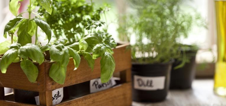 Plantas na cozinha